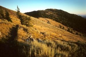 Elkhorn Crest Trail